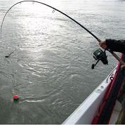 Tutte le canne siluro o pesca pesante